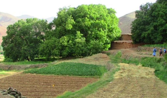 le prime case del villaggio di Abachkou